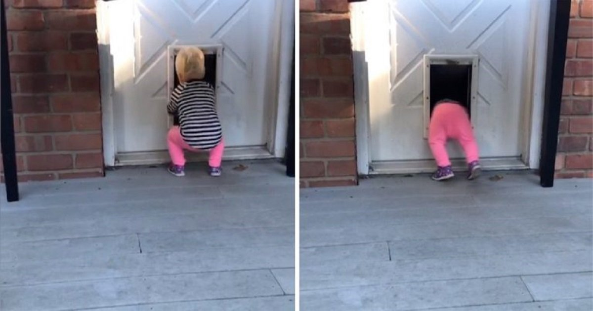 t3 2.jpg?resize=1200,630 - Adorable Toddler Discovered The Wonders Of Dog Doors And Now She Can't Stop Using It