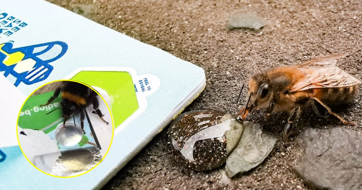 ttet.jpg?resize=412,232 - Dehydrated Bees Saved Using A New Scheme Of Bank Cards Which Contain Fondant Sugar