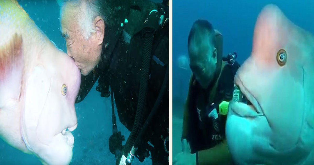 untitled 1 30.jpg?resize=1200,630 - This Diver Has Been Visiting His Best 'Fish' Friend For 25 Years