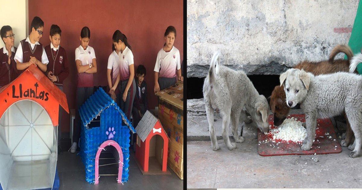 untitled 1 44.jpg?resize=300,169 - Les élèves d'une école élémentaire ont utilisé des matériaux recyclés pour construire des niches pour les chiens errants