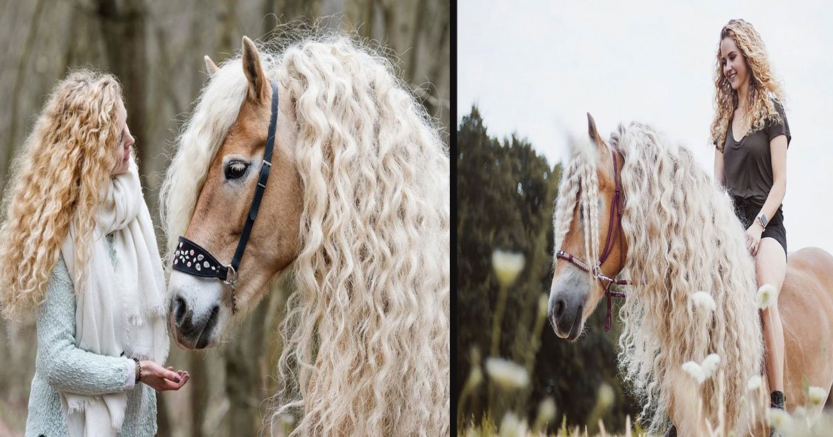 This Beautiful Horse Looks Like It Just Stepped Out From A Fairy Tale Small Joys
