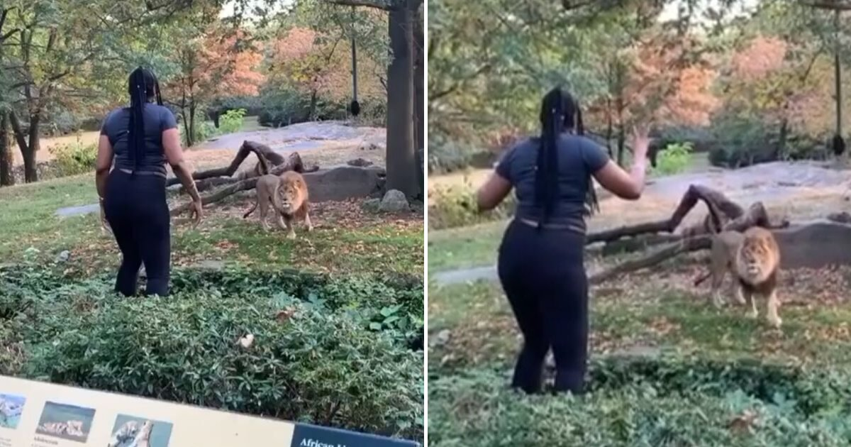 untitled design 72.png?resize=1200,630 - Reckless Woman Climbed Into Lion Enclosure To Taunt The Beast