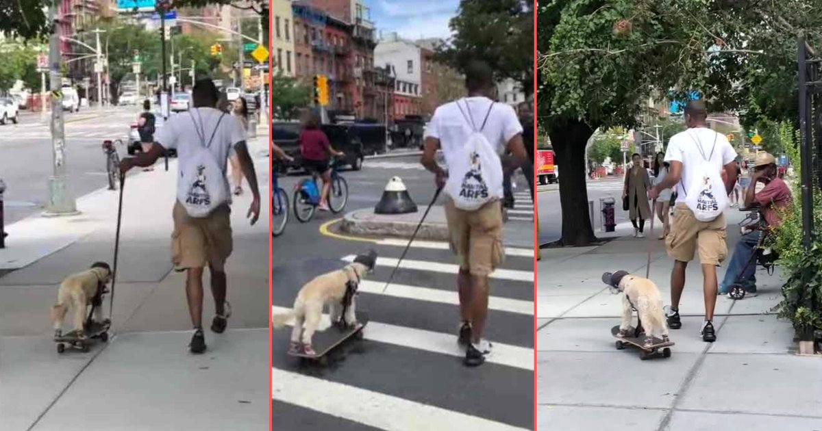 y 2 6.png?resize=412,232 - Man Gave His Dog A Fun Skateboard Ride In New York City