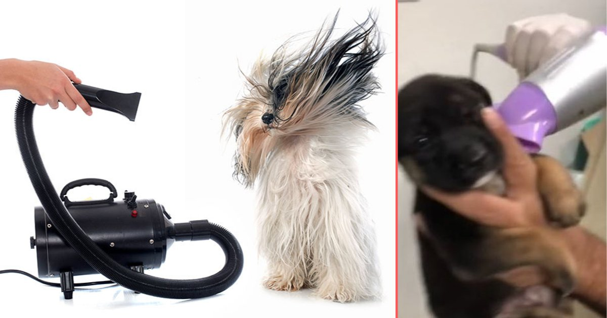 y 4 5.png?resize=412,232 - Puppy Calmly Lets His Owner Blow-Dry His Fur After His First Bath