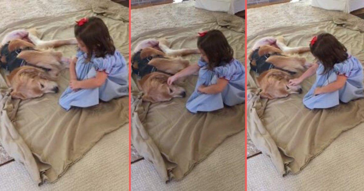 y 4 7.png?resize=412,275 - Vidéo adorable : Une petite fille réconforte son ami le chien après qu'il ait été opéré