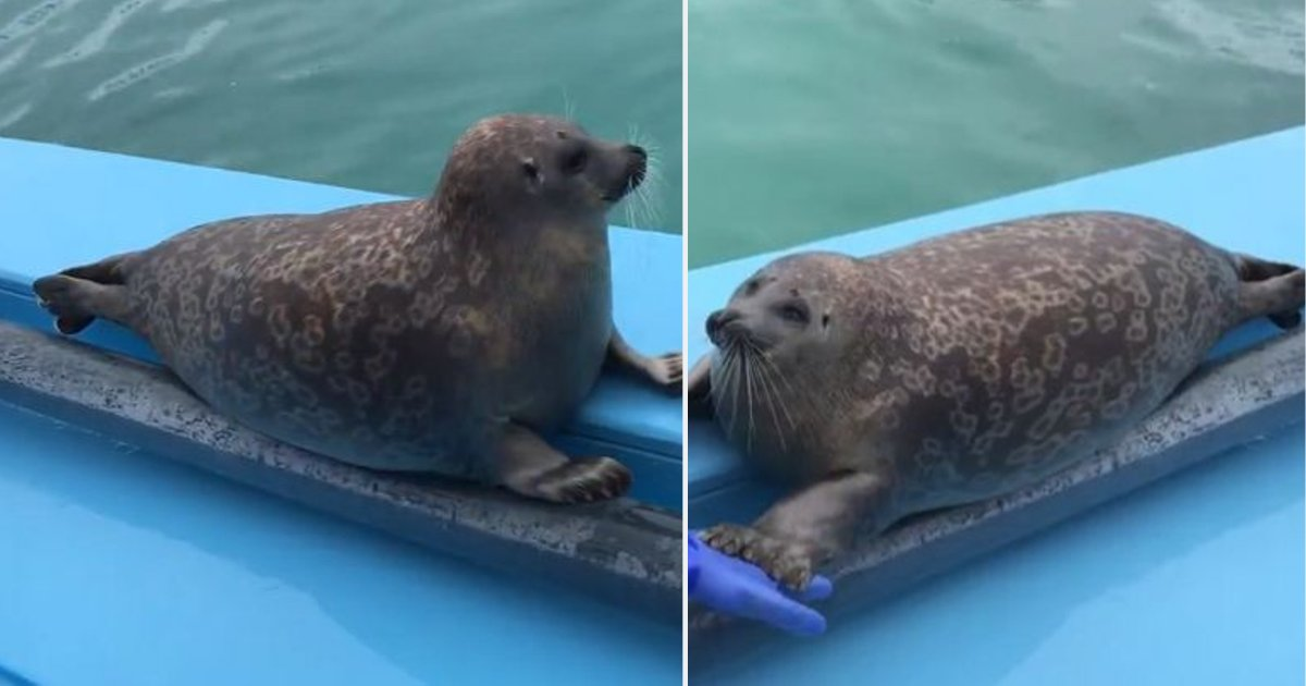 y2 7.png?resize=1200,630 - Cute Baby Seal Performs A Fantastic Trick For Onlookers