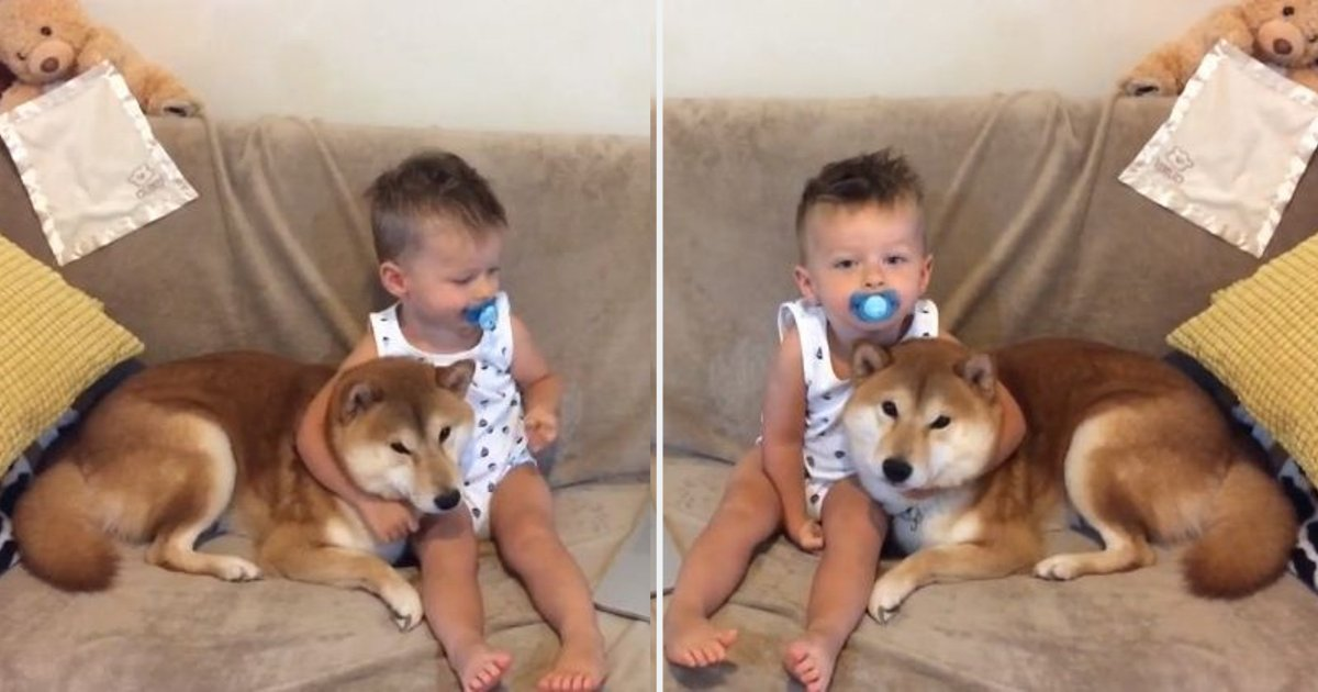 y3 7.png?resize=412,232 - An Adorable Moment Shared Between A Shiba Inu and The Baby