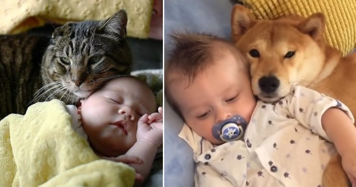 y3 8.png?resize=412,232 - Toddler, Pup, and Cat All Cuddle Together
