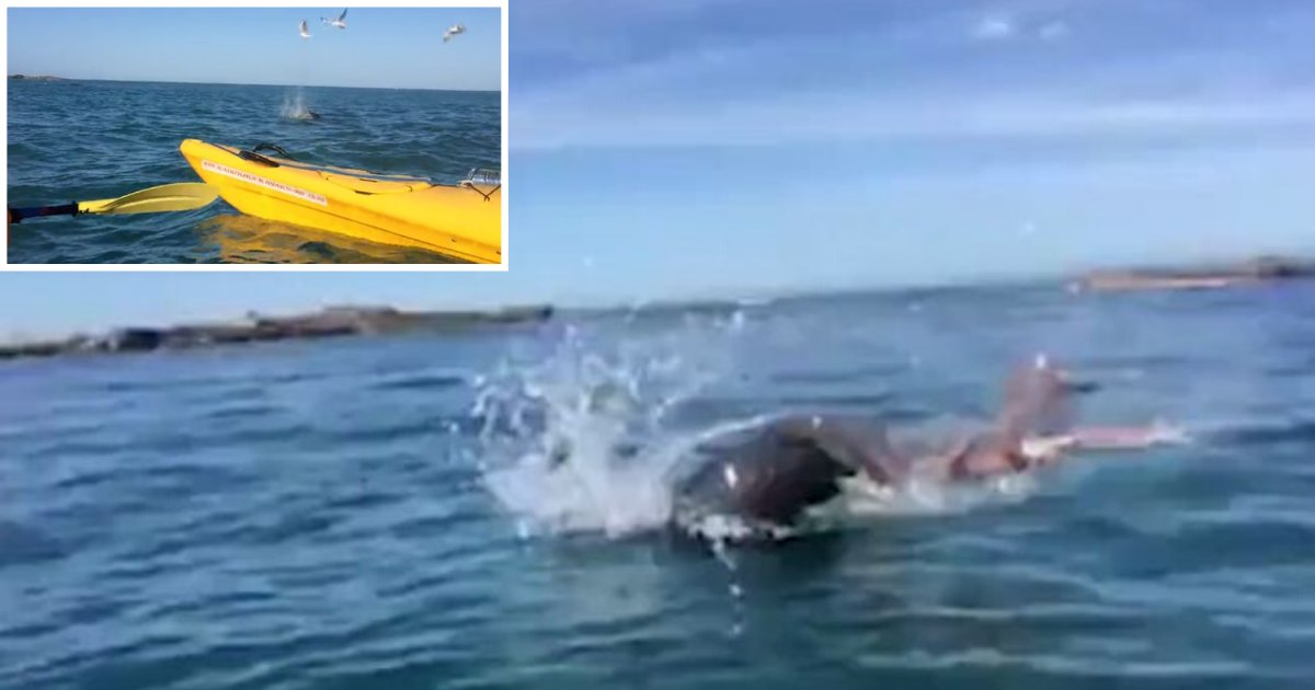 1 34.png?resize=300,169 - Vidéo incroyable : Un phoque attaque une pieuvre géante