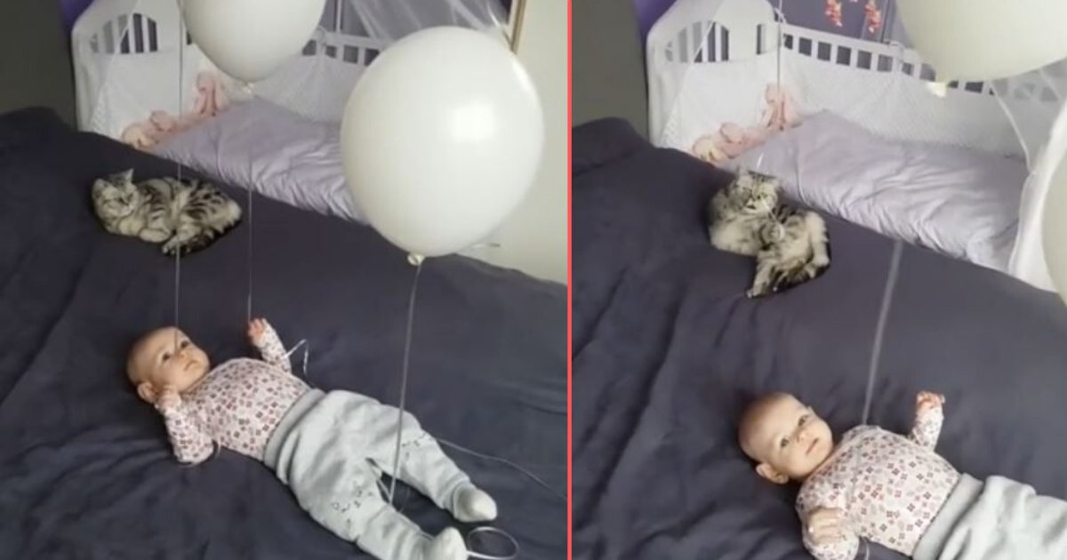 2 6.png?resize=412,232 - Cat and Baby Have A Great Time Playing With Balloons