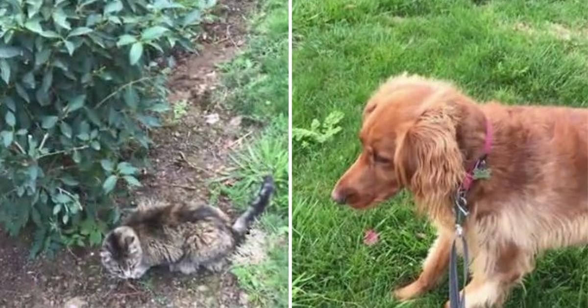 3 130.jpg?resize=412,232 - Dog Is Left Completely Frozen at the Sight of His Mortal Enemy, A Cat, Leaving the Owner Laughing In Tears