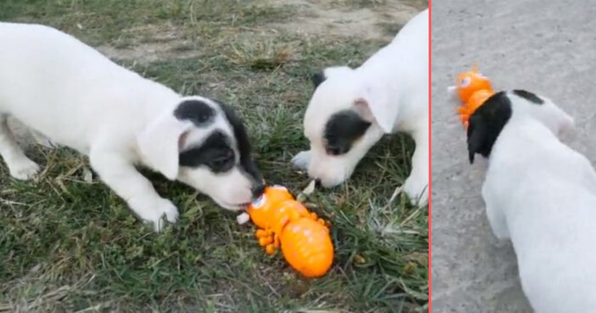 3 21.png?resize=574,582 - Two Adorable Puppies Wrestle With Giant Mechanical Toy Ant