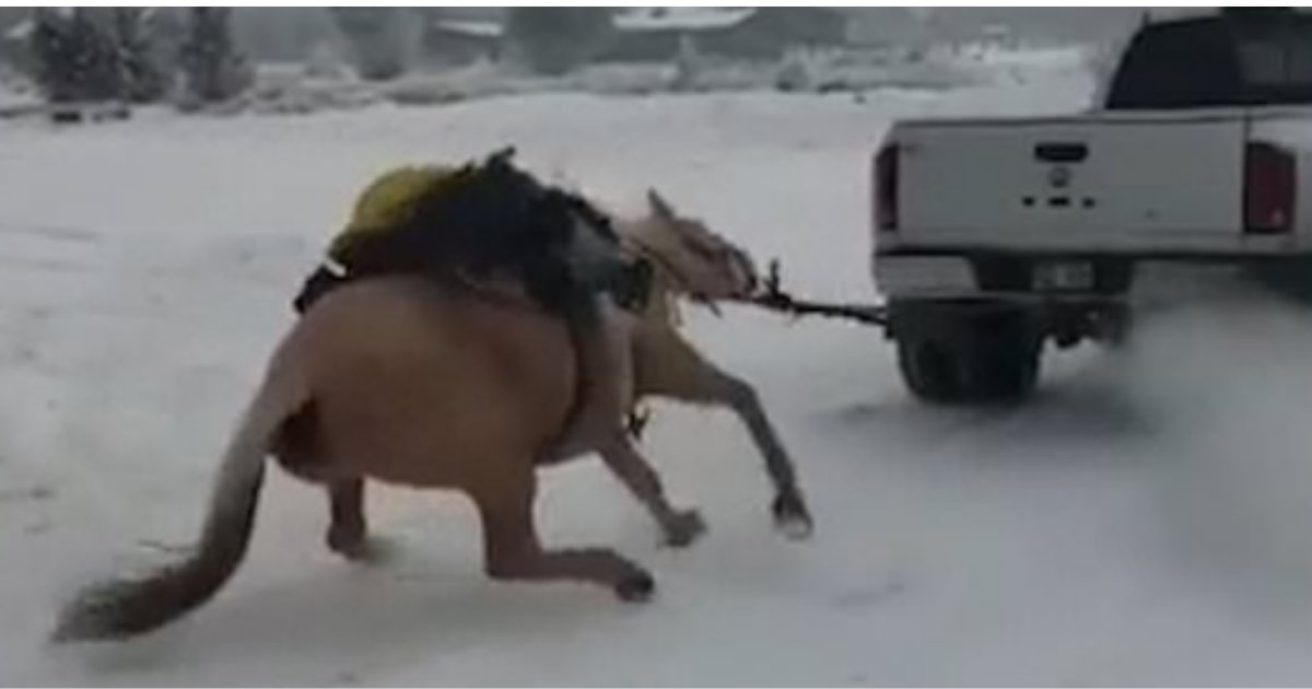 3 33.png?resize=412,275 - Couple Charged In Colorado As A Horse Was Seen Being Dragged By A Pick-Up Truck