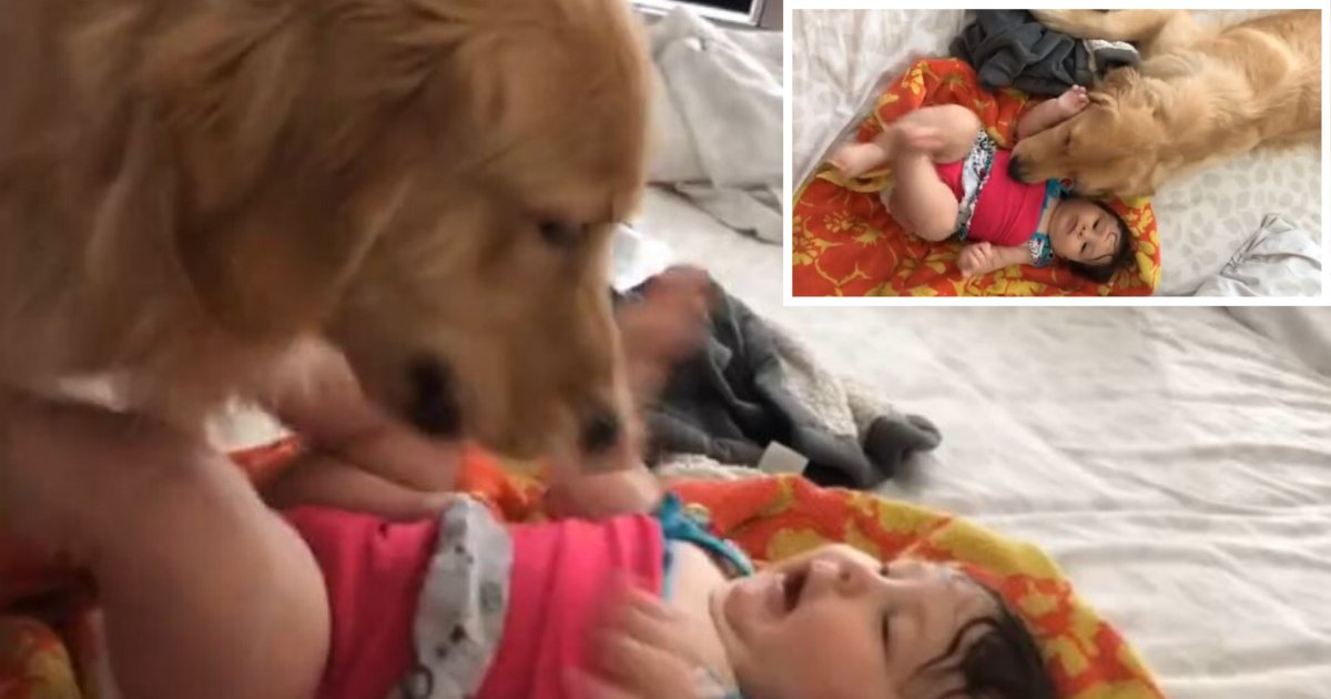 3 8.png?resize=412,232 - Super Excited Dog Calms Down to Play With The Baby Girl