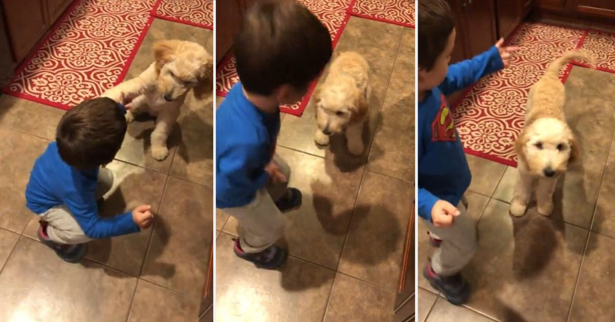 4 7.png?resize=412,232 - Adorable Baby Teaches His Puppies How to Do Tricks