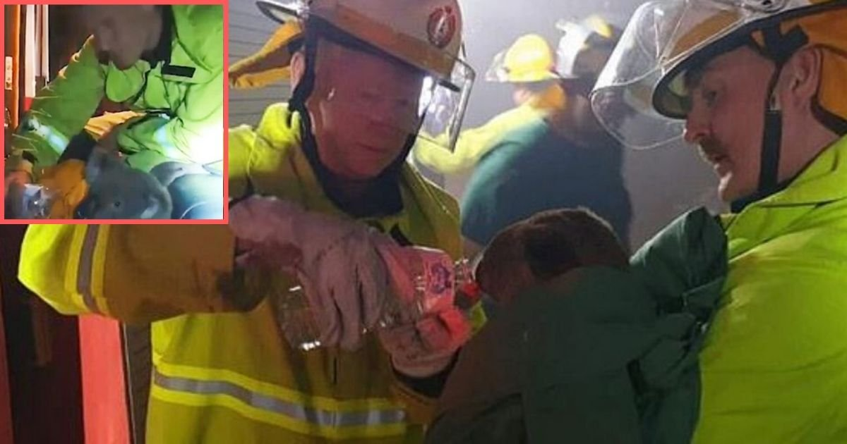 6 46.jpg?resize=412,232 - Thoughtful Firefighters Rescued Two Koalas From the Bushfire and Gave Them Water