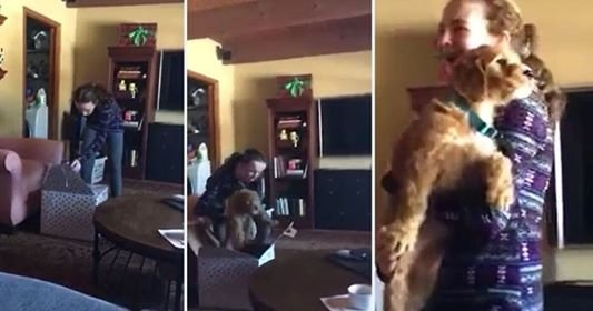 74661774 471892123457341 1865079085747666944 n.jpg?resize=1200,630 - Girl Starts Crying After Getting A Puppy As A Surprise