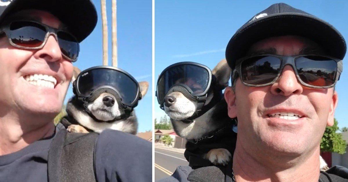 a 111 1.jpg?resize=412,275 - Motosiklet Aşığı Köpek Roket Sahibiyle Gezmelere Doyamıyor!