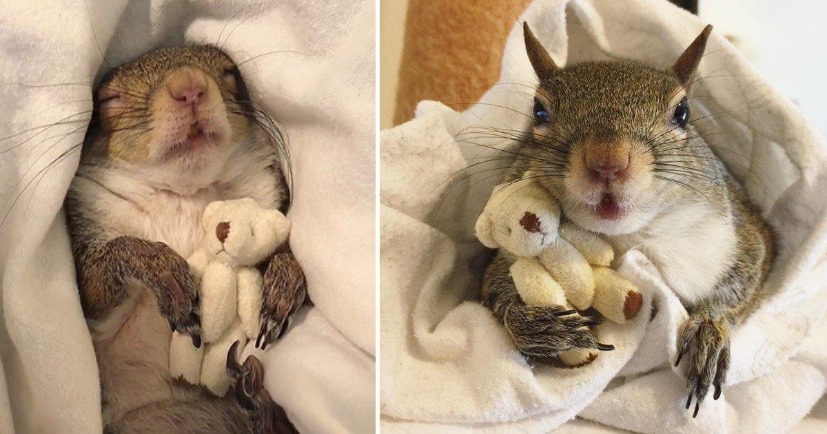 a 81.jpg?resize=300,169 - Un écureuil a développé un lien inhabituel mais adorable avec son ours en peluche