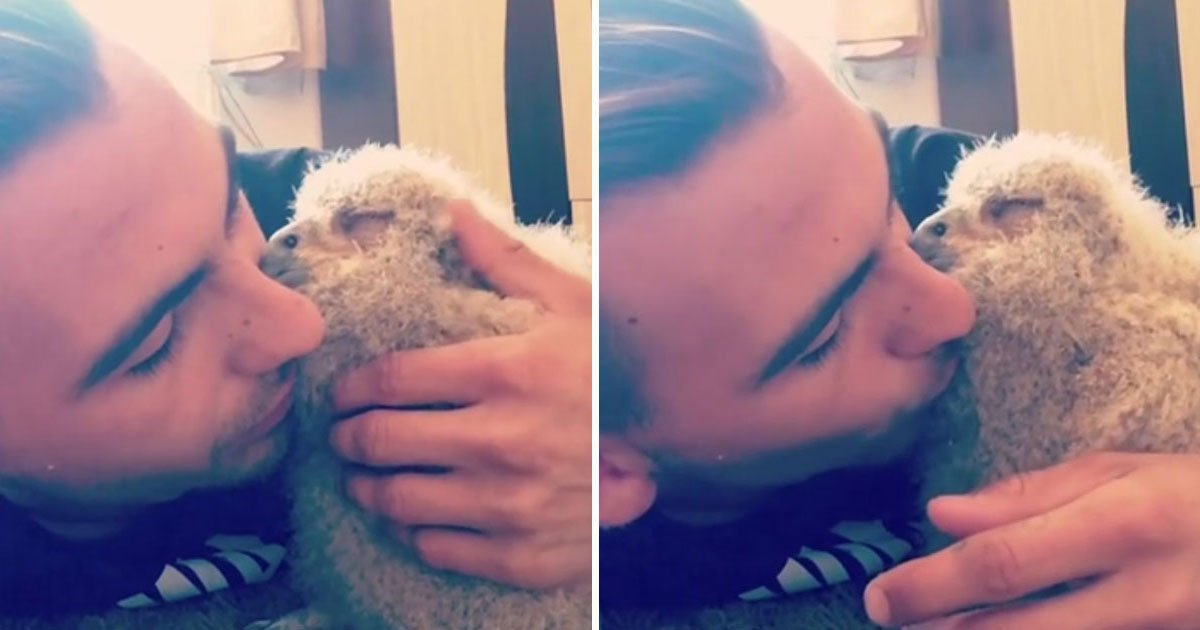 baby owl cuddling.jpg?resize=412,232 - Video Of A Baby Owl Adorably Sleeping On Its Owner's Face