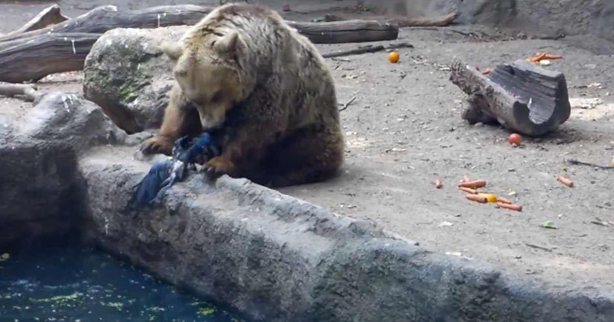 bear saves drowning crow.jpg?resize=1200,630 - Bear Saved A Drowning Crow At The Budapest Zoo