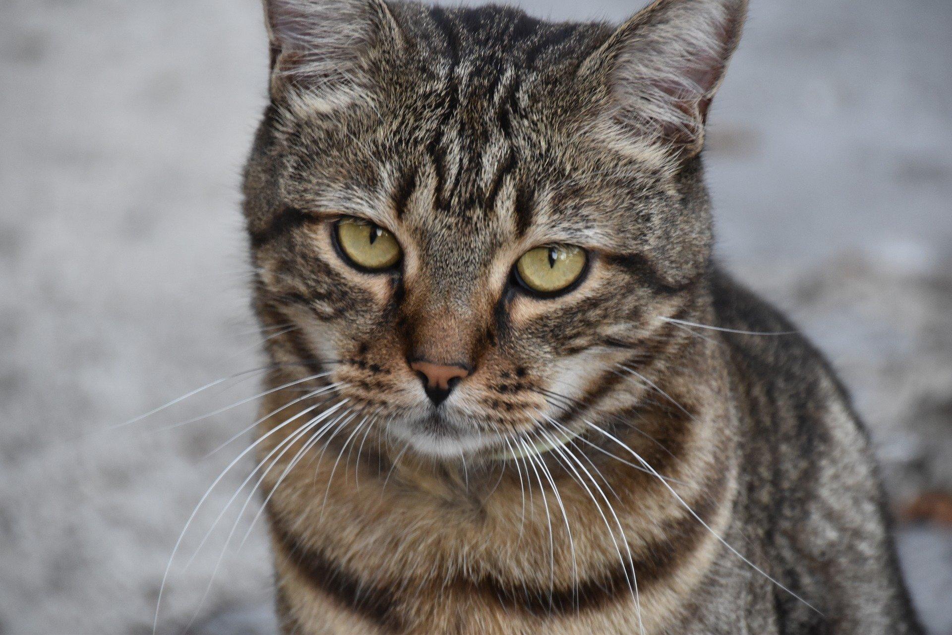 cat 2715302 1920.jpg?resize=412,232 - Malaisie : un homme condamné après avoir tué une chatte dans un sèche-linge