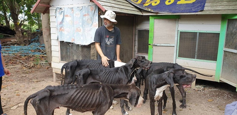 chien2.jpg?resize=300,169 - Des chiens affamés ont été retrouvés dans une ferme d'élevage canin en Thaïlande
