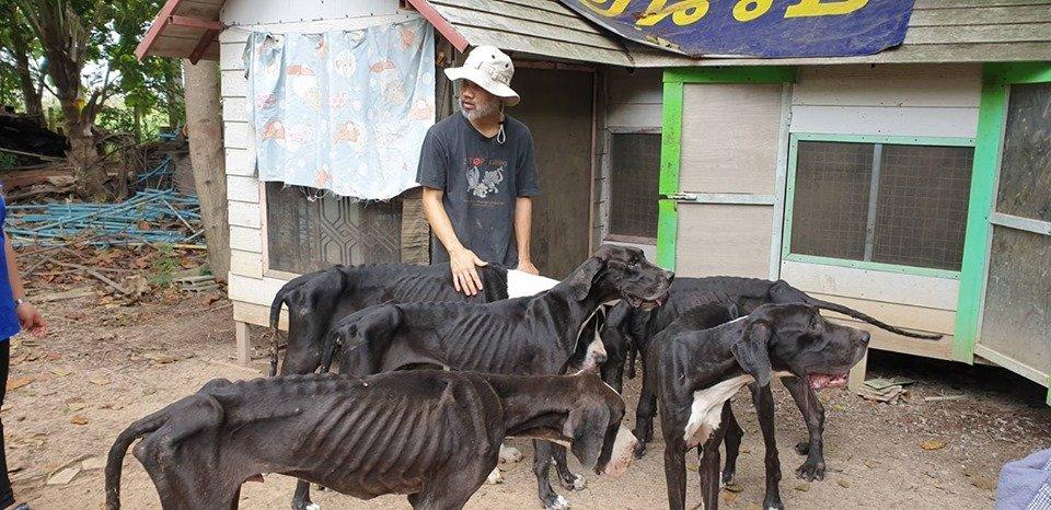 chien2.jpg?resize=412,232 - Des chiens affamés ont été retrouvés dans une ferme d'élevage canin en Thaïlande