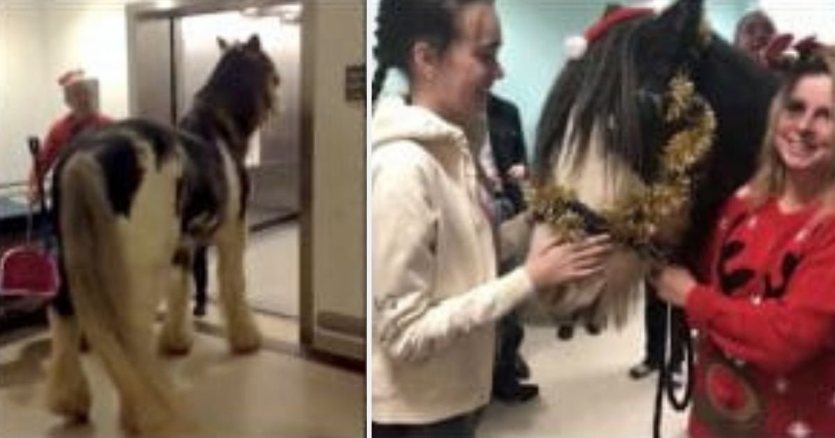 d11.jpg?resize=412,232 - Heartwarming Moment When Woman's Horse Visits Her in Hospital Recovering From E. Coli