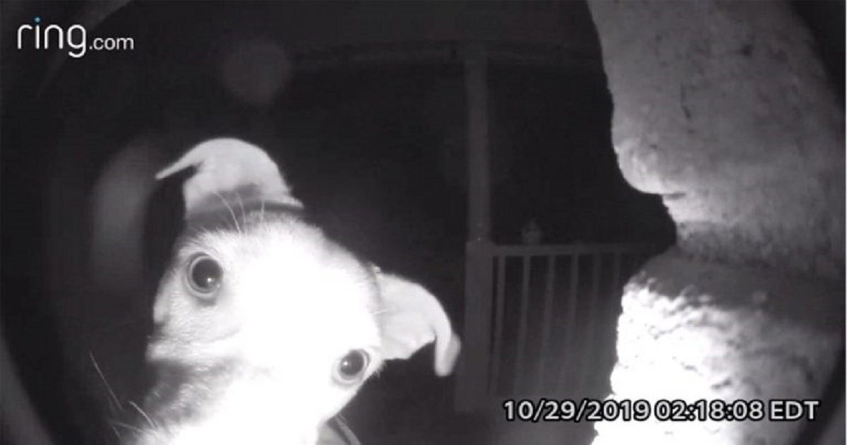 d3 1.jpg?resize=412,232 - Clever Dog Rang The Doorbell At 2 AM To Wake Up Owners After Being Accidentally Locked Outside