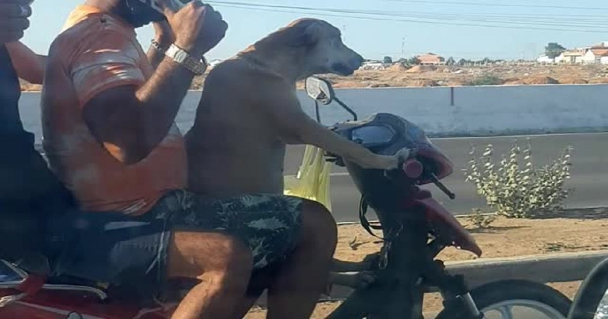 """d3 3.jpg?resize=1200,630 - A Surprised Motorist Recorded A Dog """"Driving"""" A Motorbike"""