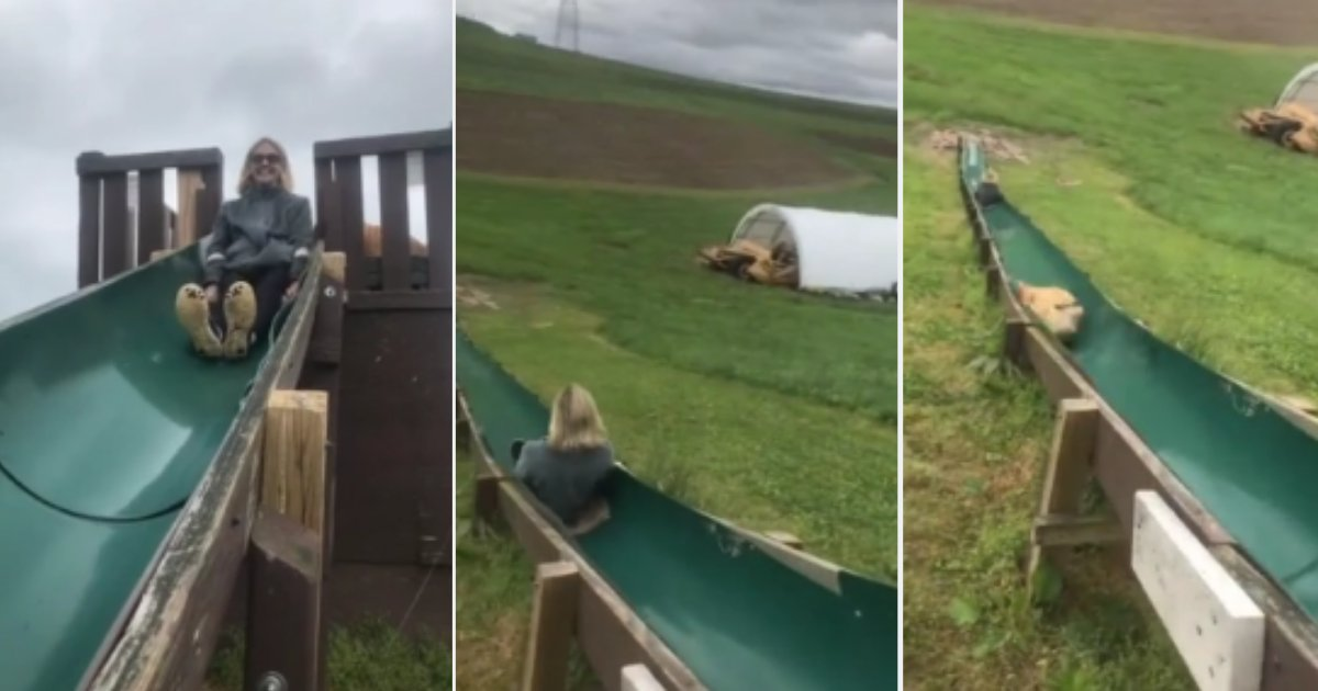d5.png?resize=412,232 - Daring Dog Chases His Owner By Jumping Off the Slide