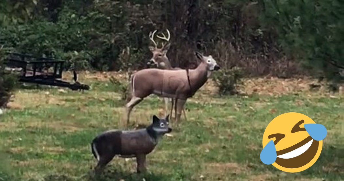 deer4.png?resize=412,232 - Wild Deer Left Confused After The Head Of Statue He's Making Love With Fell Off