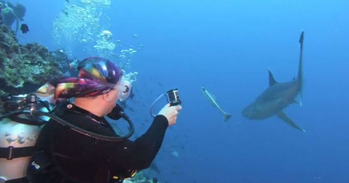 diver hit shark.jpg?resize=300,169 - Scuba Diver Punched A Shark On Its Snout After It Came Close To Her Face