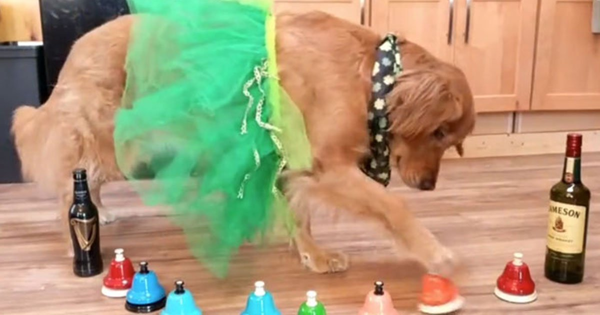 dog celebrating st patricks day.jpg?resize=412,232 - Dog Celebrating St. Patrick's Day By Playing 'Danny Boy' On The Bells