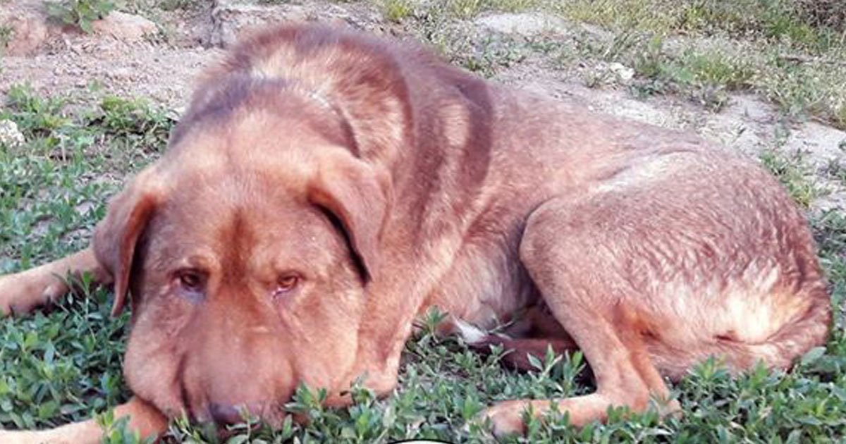 dog passed away.jpg?resize=300,169 - Dog - Who Was Tied Up With A Rope Around His Neck - Passed Away
