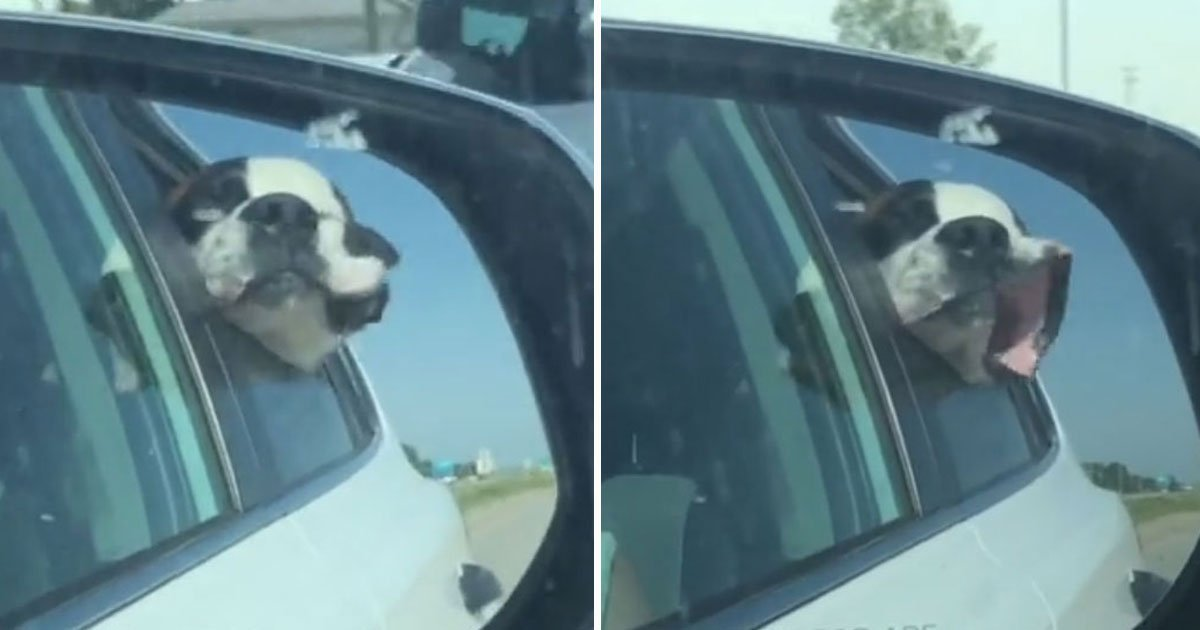dogs face flaps in the wind.jpg?resize=412,232 - Hilarious Video Of A Dog's Face Flapping In The Wind