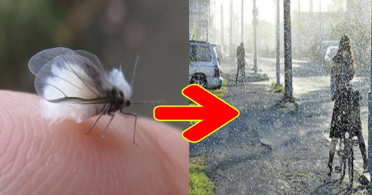 e696b0e8a68fe38397e383ade382b8e382a7e382afe38388 28.png?resize=1200,630 - 雪虫パニック!?例年の1500倍もの雪虫が北海道で大量発生している理由とは