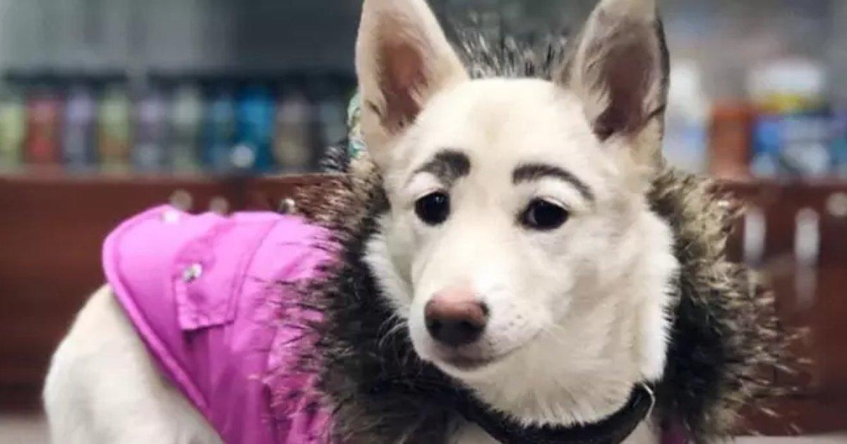 frida4.png?resize=1200,630 - Découvrez Frida, une chienne qui a des sourcils humains