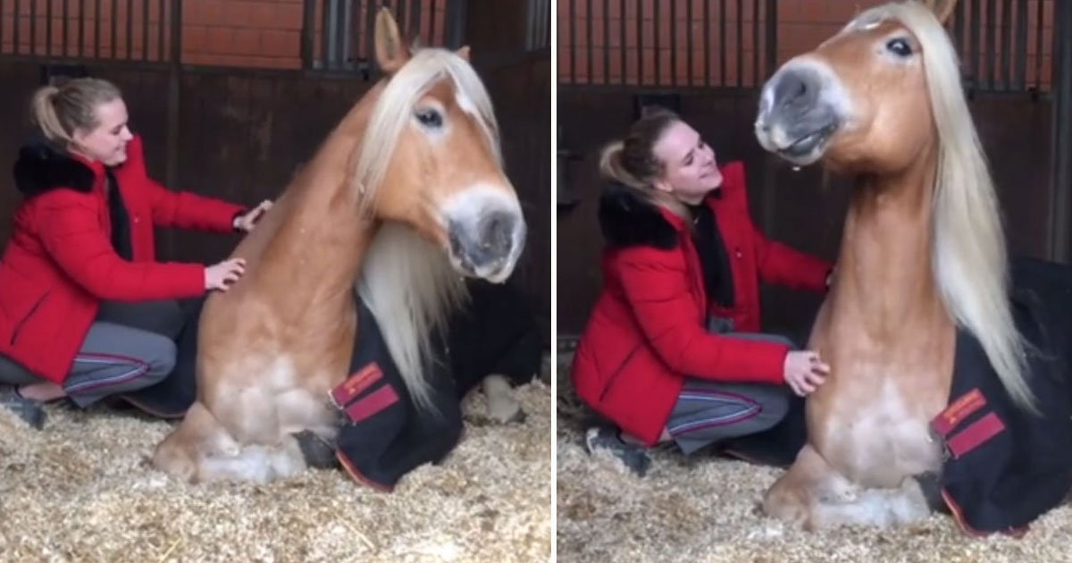horse smiles scratching session.jpg?resize=412,232 - Video Of A Horse Smiling While His Human Friend Scratches Its Back