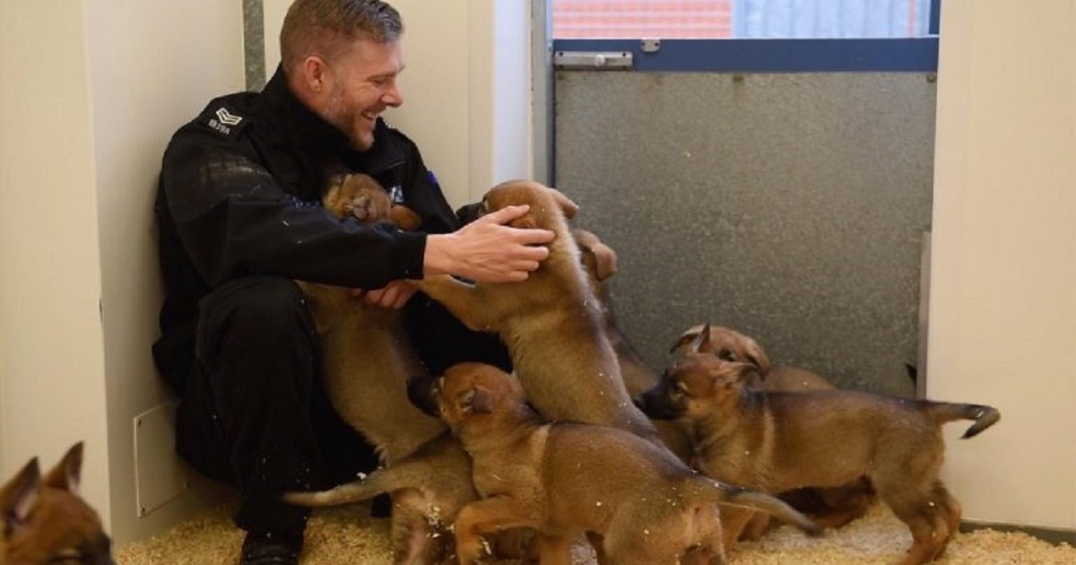 p3.jpg?resize=300,169 - A Police Dog Unit Welcomed Their Newest Recruits - 9 Cute And Cuddly German Shepherd Pups