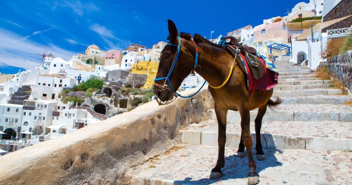 peta4.png?resize=412,232 - Greek Donkeys Are Still Being Forced To Carry Overweight Tourists In Santorini Despite New Law