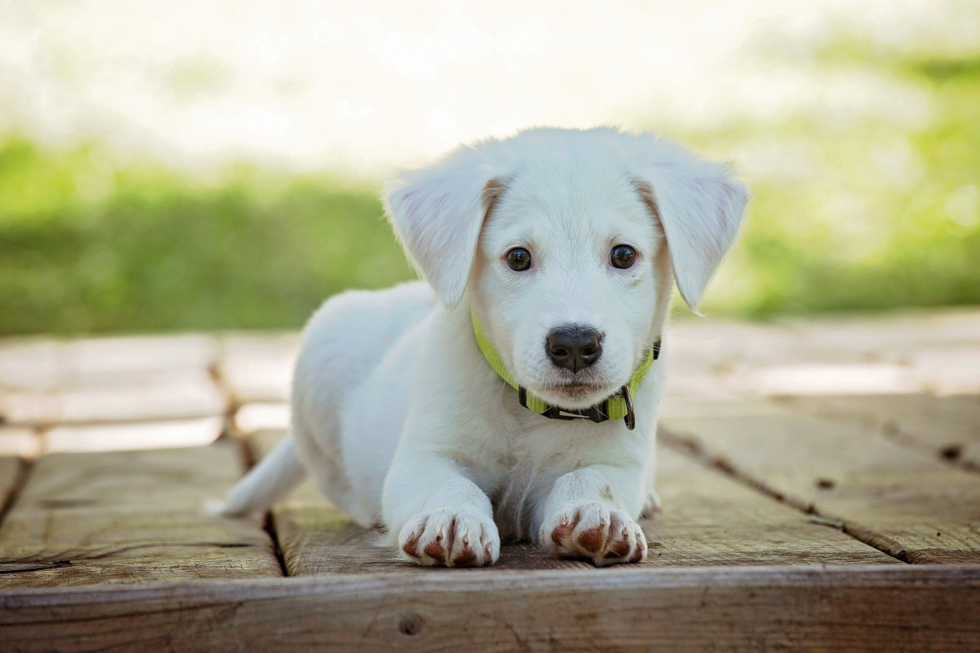 puppy 1903313 1920.jpg?resize=412,275 - En France, le trafic illégal de chiots élevés en Europe de l'Est inquiète