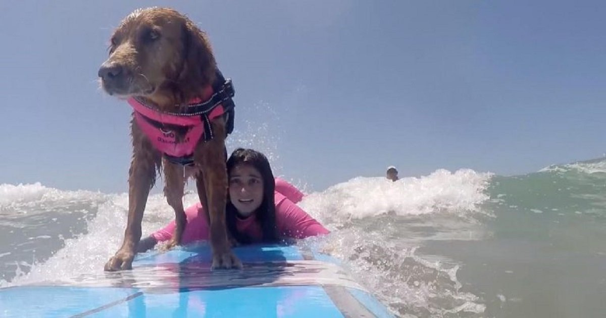 s3 8.jpg?resize=1200,630 - 11-Year-Old Therapy Dog Is Also A Surfing Instructor For People With Disabilities And Veterans