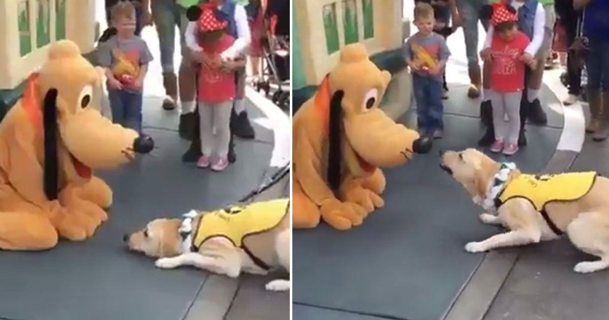 service dog met pluto disneyland.jpg?resize=412,232 - Service Dog's Reaction After Meeting Pluto At Disneyland