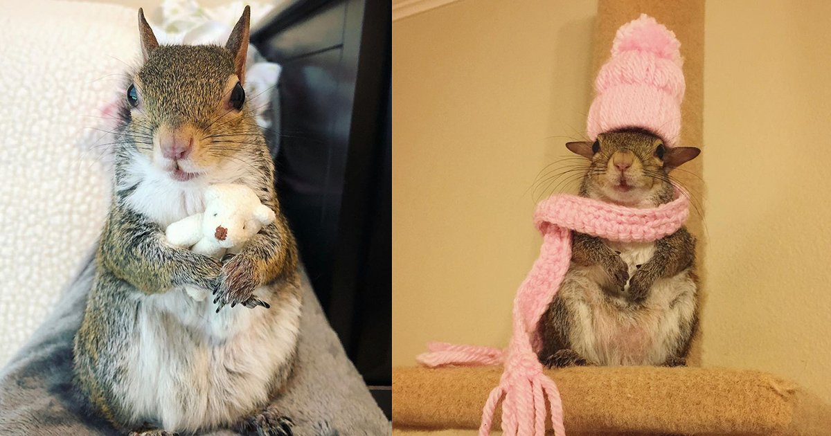 tdsf.jpg?resize=1200,630 - Meet Jill, The Squirrel, Adorably Wacky Pet Who Can't Sleep Without Her Teddy Bear