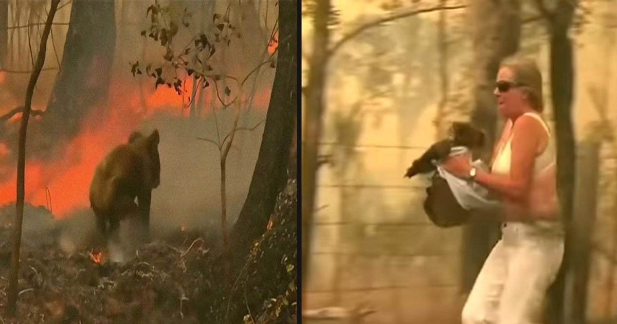 untitled 1 78.jpg?resize=412,232 - Courageous Woman Risked Her Own Life To Save A Koala From The Bushfire In Australia