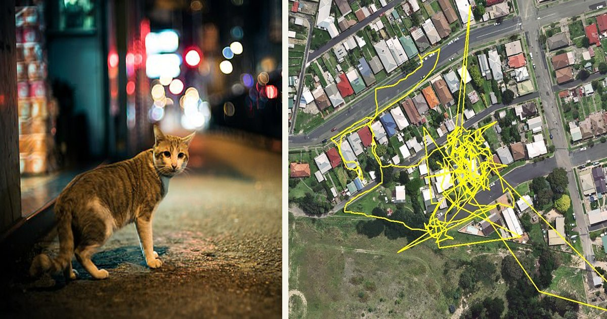 untitled 5 4.jpg?resize=1200,630 - GPS Trackers Revealed Cats' Adventures During The Night