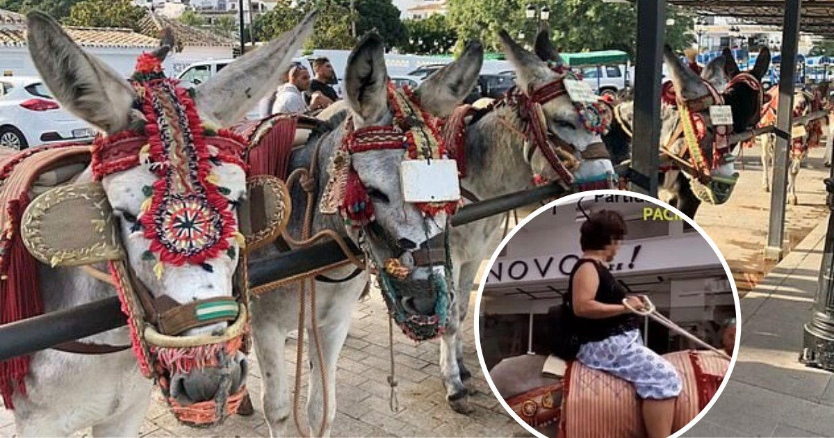 untitled design 29.png?resize=412,232 - Popular Holiday Resort Banned Overweight Tourists From Riding Donkeys