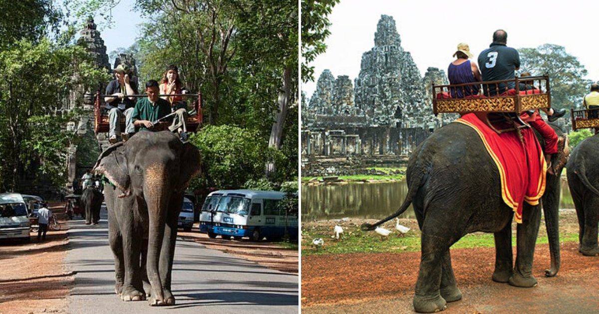 untitled design 40.png?resize=412,232 - Authorities Banned Elephant Rides And Vowed To Provide New Home For Elderly Animals